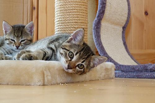 Image result for catnip cafe norfolk